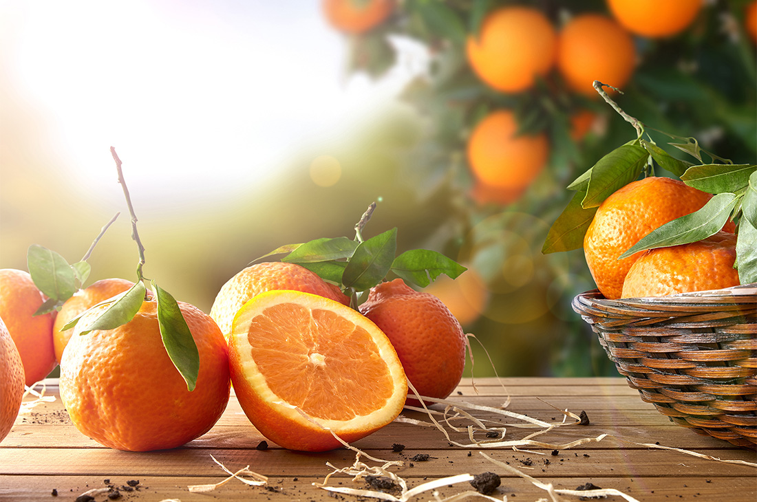 Egypt Leads the Orange Export Industry 2 Years in a Row